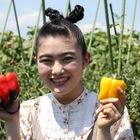 食べなきゃ分からない?!直売所に並ぶ野菜の魅力を清水農園さんの畑からレポート!(東京・国分寺)