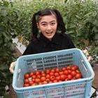 清瀬市の人気ブランドトマトを育てる「関ファーム」をイノサクらジモチョク探検隊が直撃!(東京・清瀬市)