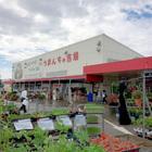 沖縄最大の直売所 ファーマーズマーケットいとまん「うまんちゅ市場」は島野菜パラダイス!(沖縄・糸満市)