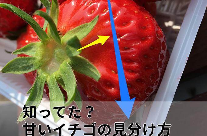 いちごはヘタから種までの長さに注目!神戸の自然が育んだ、『二郎いちご』でいちご狩り」(兵庫県・神戸市)