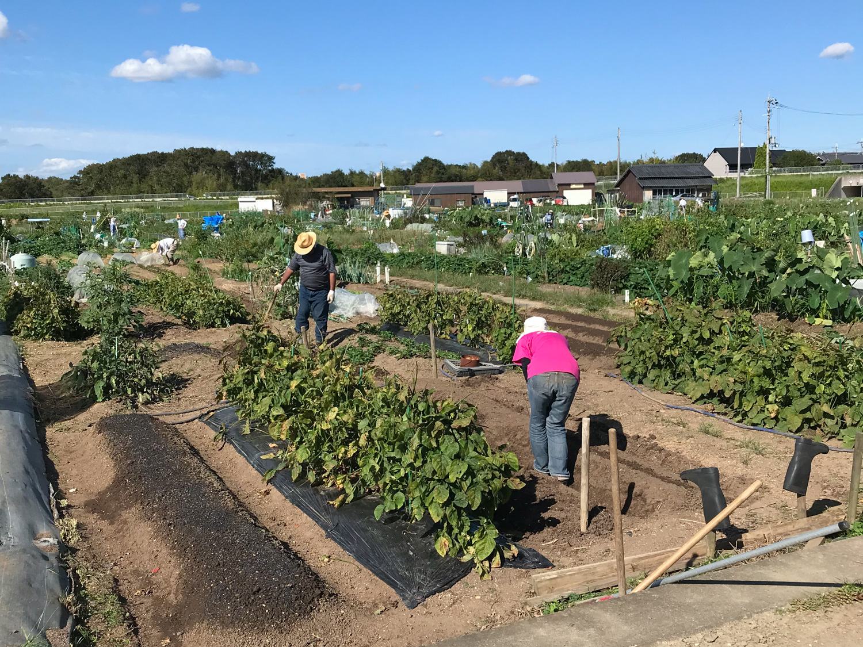 貸農園で農作業される利用者