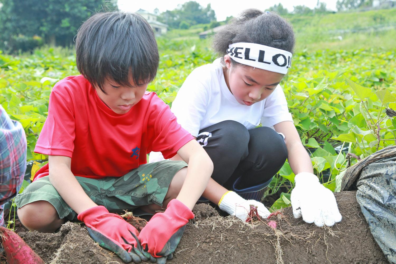 「里山シェア大井松田」でできるさつまいも掘り体験