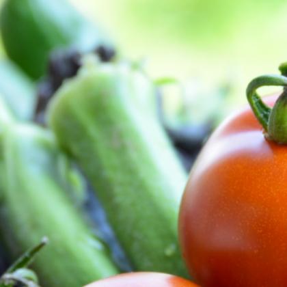 夏野菜収穫