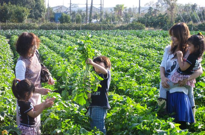 季節野菜の収穫体験