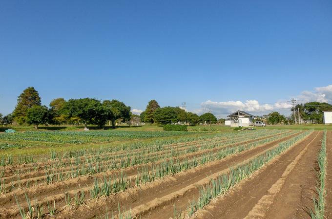 貸し農園で週末の野菜作り