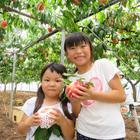 季節のフルーツ収穫体験