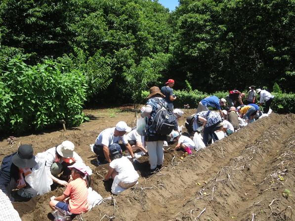 トウモロコシと枝豆の種まき体験と畑散策