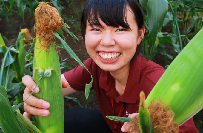 トウモロコシ収穫とグリルドコーン