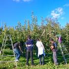 米崎りんご 農業体験(オールシーズン)