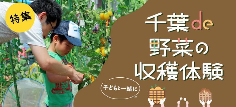 千葉で夏野菜が収穫体験ができる農業公園特集