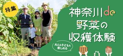 神奈川で夏野菜が収穫体験できる農業公園特集