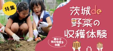 茨城県で野菜の収穫体験ができる農業公園特集